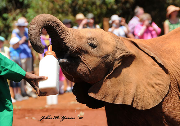 Daphne Sheldrick Elephant Orphanage and Nairobi National Park 1