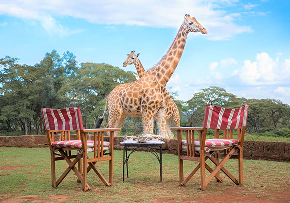 Giraffe Manor Nairobi Accommodation